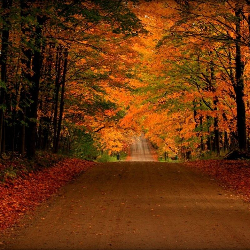 10 Most Popular Free Screen Savers For Fall FULL HD 1080p For PC Background 2018 free download free fall screensavers and wallpaper free orange autumn road 2 800x800
