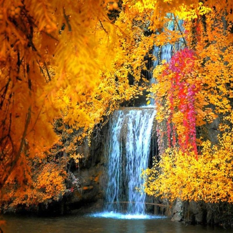 10 New Fall Screen Savers Free FULL HD 1920×1080 For PC Desktop 2020 free download free fall screensavers and wallpaper free waterfall in autumn 800x800