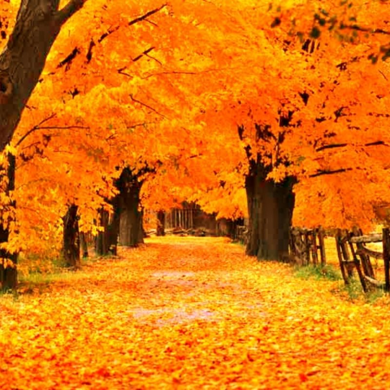 10 New Fall Screen Savers Free FULL HD 1920×1080 For PC Desktop 2020 free download free fall screensavers and wallpaper the free gold autumn 800x800