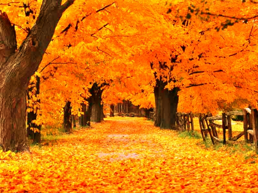 free fall screensavers and wallpaper   the free gold autumn