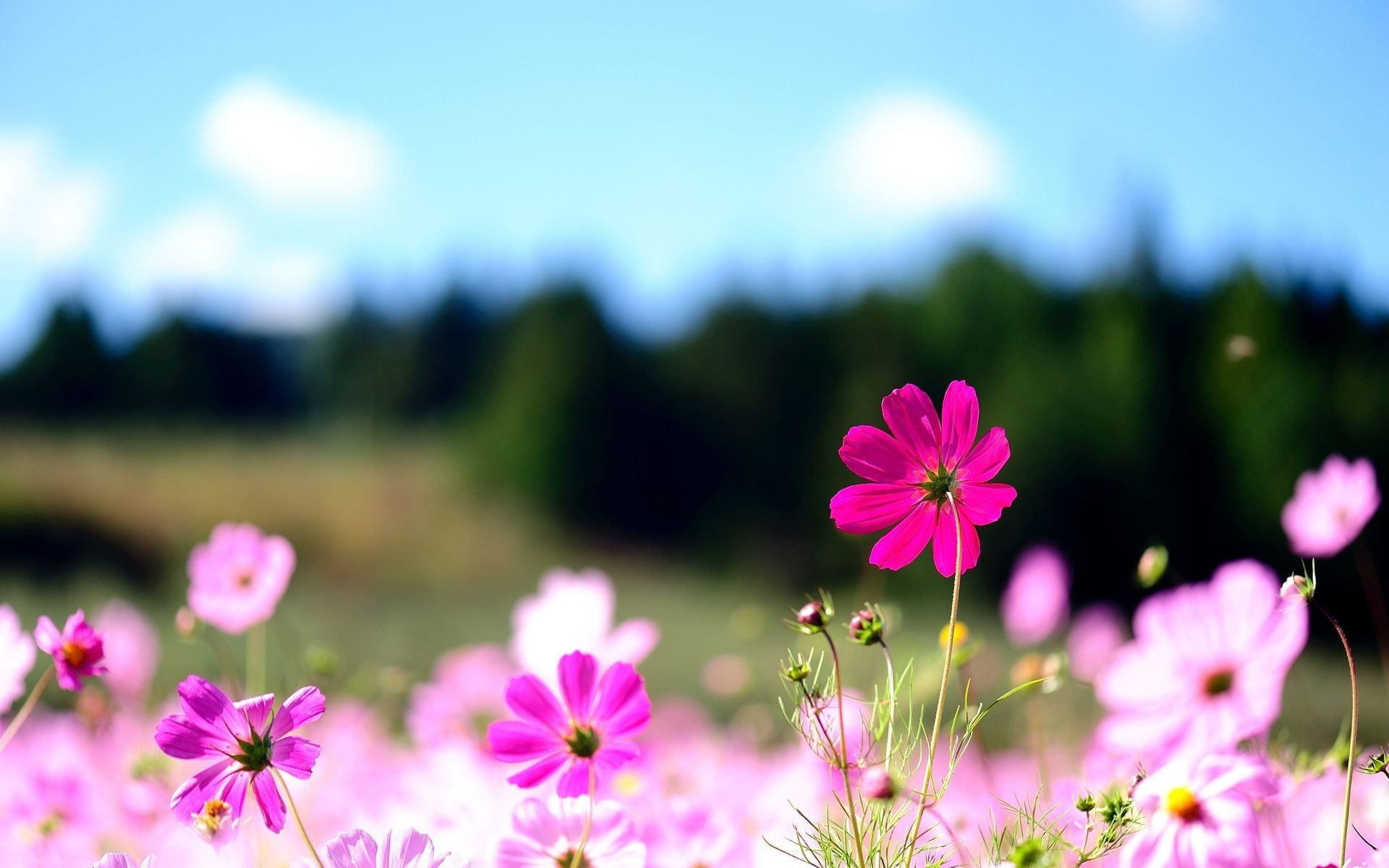 free flowers for desktop background full hd pics widescreen flower