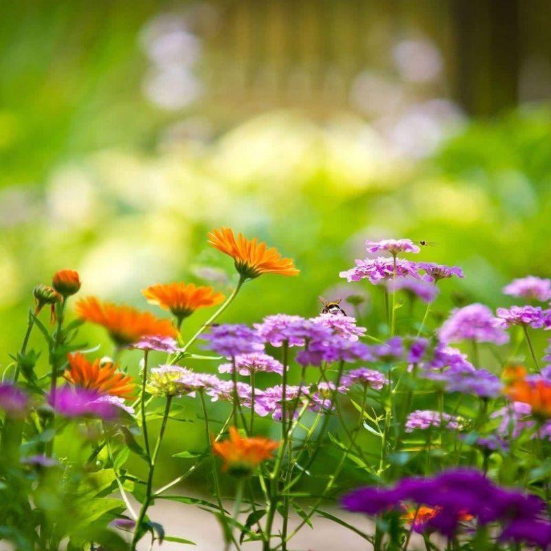 10 Best Flowers Wallpaper Desktop Background Full Screen FULL HD 1920x1080 For PC