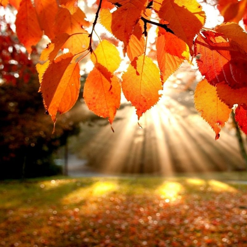 10 Latest Fall Leaves Hd Wallpaper FULL HD 1080p For PC Desktop 2018 free download free hd fall wallpapers pixelstalk 1 800x800