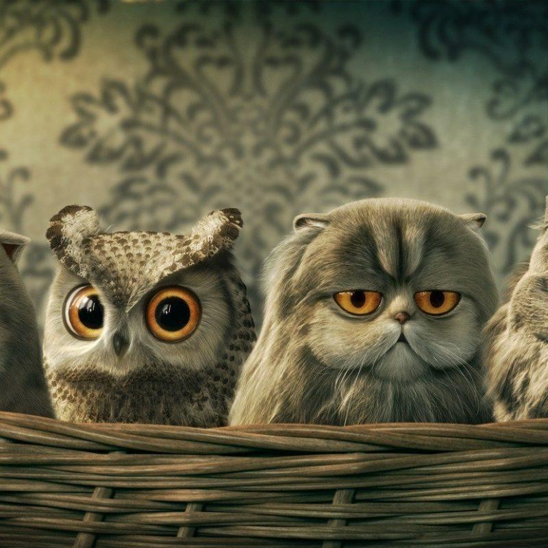 10 Top Owl Desktop Wallpaper Hd FULL HD 1920×1080 For PC Desktop 2018 free download free hd funny owl desktop wallpapers download 800x800