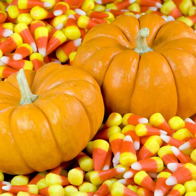 10 New Fall Pumpkin Wallpaper Hd FULL HD 1920×1080 For PC Desktop 2018 free download free hd pumpkin wallpapers images wallpaper wiki 800x800
