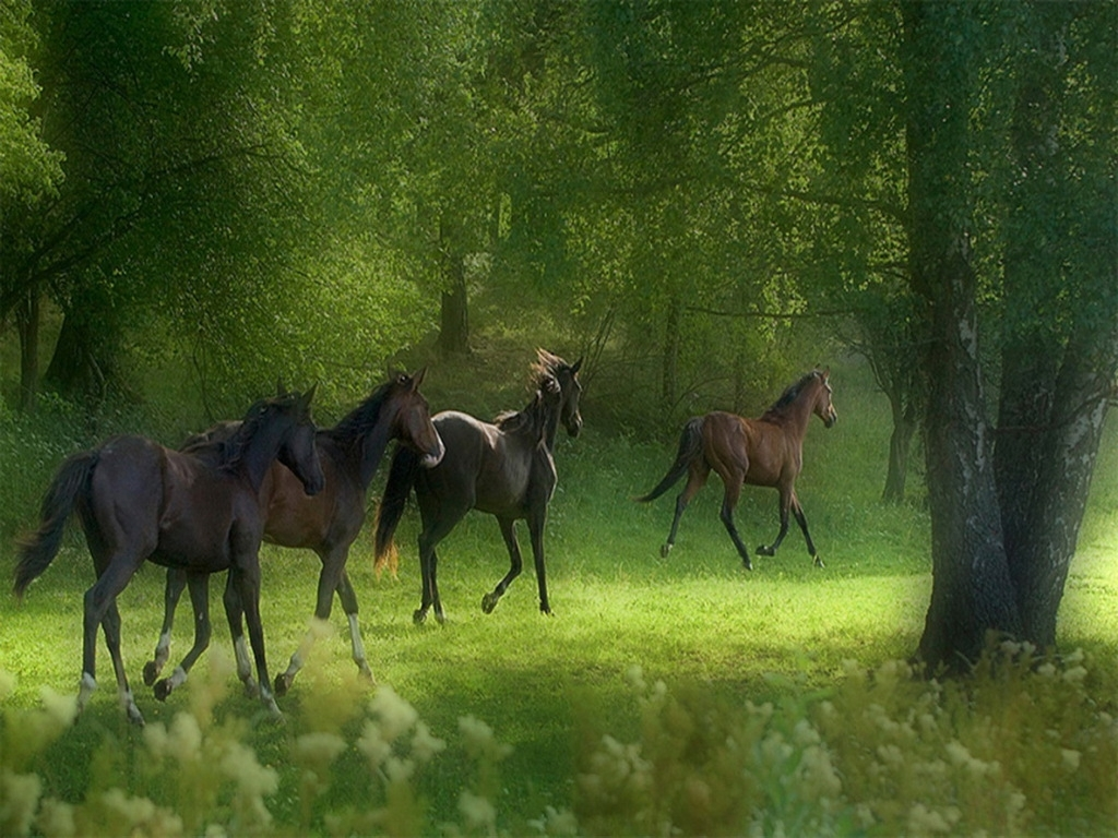 free horse screensavers | free download wallpapers running horses