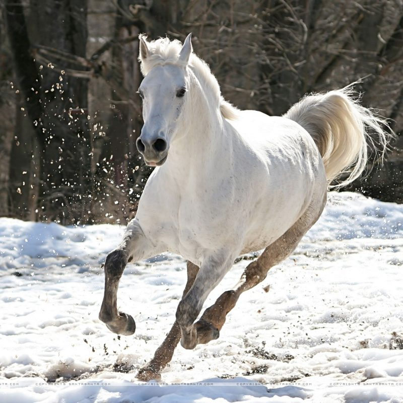 10 Best Free Horse Wallpaper For Computer FULL HD 1080p For PC Background 2018 free download free horse wallpaper for computer 42 horse photos and pictures 800x800