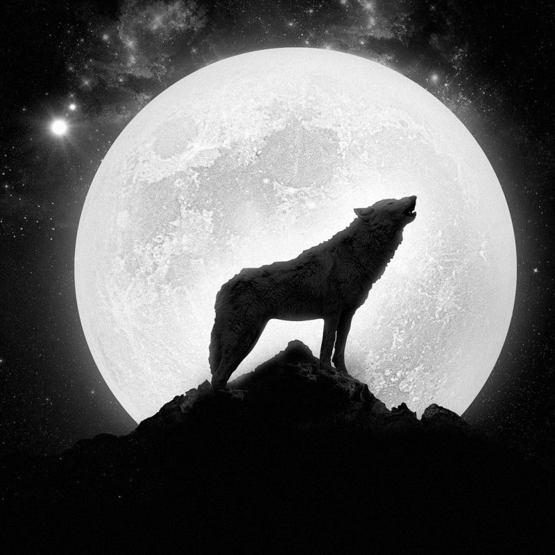 10 New Wolf Howling At The Moon Wallpaper Hd FULL HD 1080p For PC Background 2021 free download free howling wolf wallpaper hd resolution long wallpapers 800x800