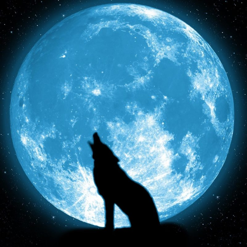 10 New Wolf Howling At The Moon Wallpaper Hd FULL HD 1080p For PC Background 2018 free download free howling wolf wallpapers widescreen long wallpapers 800x800