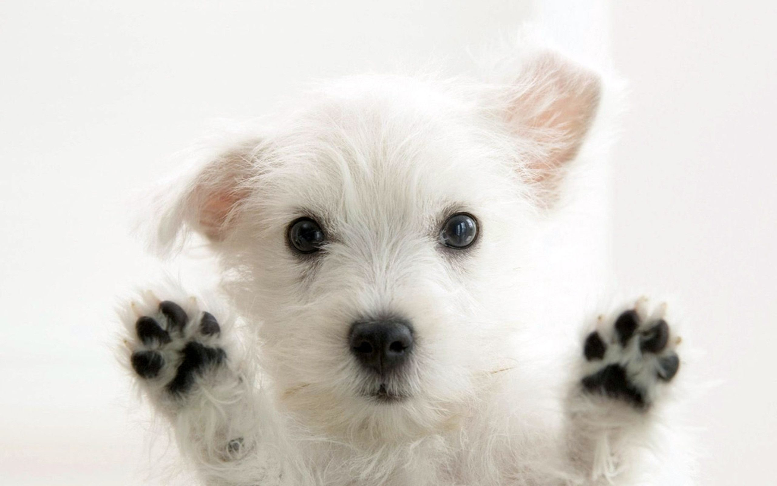 free puppy wallpapers desktop background « long wallpapers