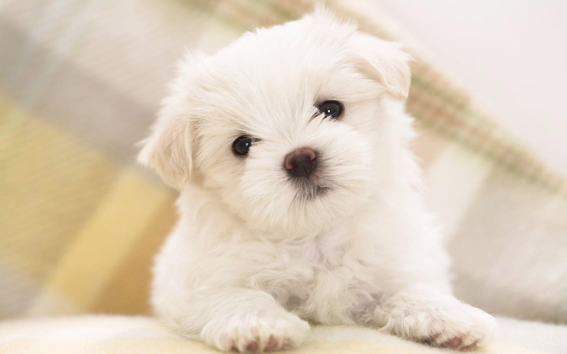 10 Most Popular Cute Puppies Wallpapers For Computer FULL HD 1920×1080 For PC Background
