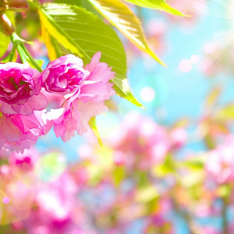 10 Most Popular Spring Desktop Wallpapers FULL HD 1080p For PC Background 2018 free download free spring desktop wallpaper spring 79 free wallpapers free 1 800x800