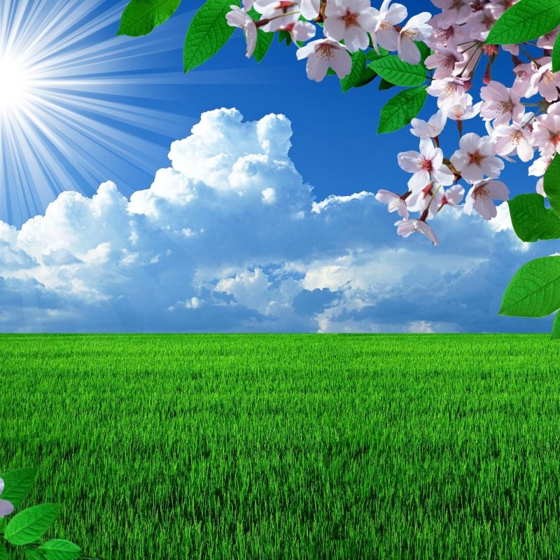 10 Best Free Spring Desktop Backgrounds FULL HD 1920×1080 For PC Background 2020 free download free spring desktop wallpapers backgrounds wallpapersafari best 1 800x800