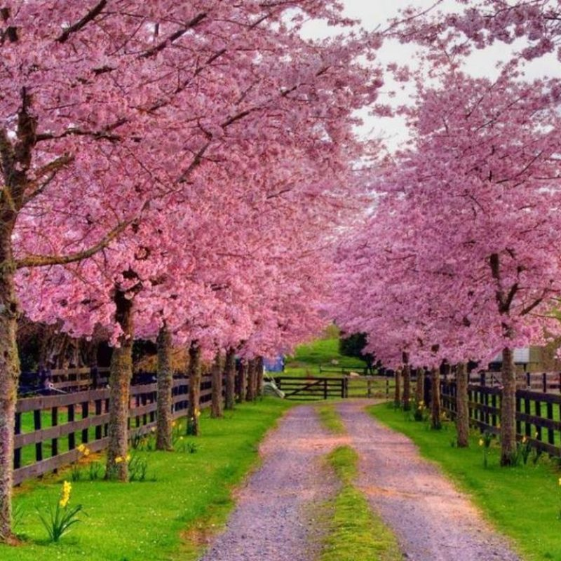10 Top Free Spring Wallpaper And Screensavers FULL HD 1920×1080 For PC Background 2018 free download free spring wallpapers and screensavers wallpaper cave 3 800x800
