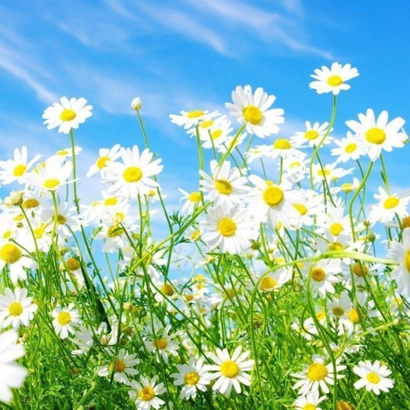 10 Top Free Spring Wallpaper And Screensavers FULL HD 1920×1080 For PC Background 2018 free download free spring wallpapers and screensavers wallpaper cave 4 800x800