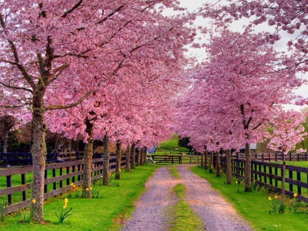 free spring wallpapers and screensavers - wallpaper cave
