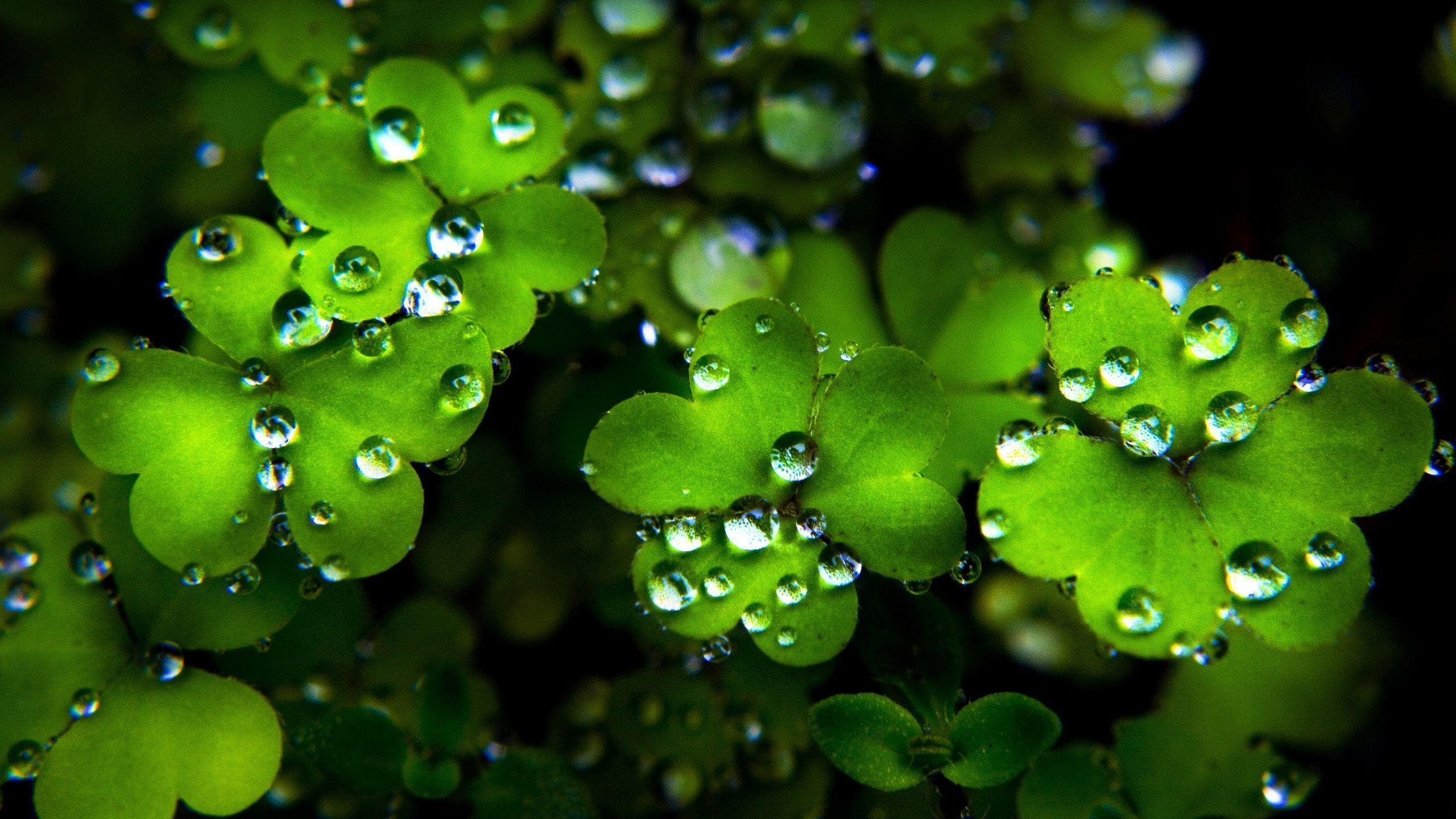 10 Best St Patricks Day Screensaver FULL HD 1920×1080 For PC Background