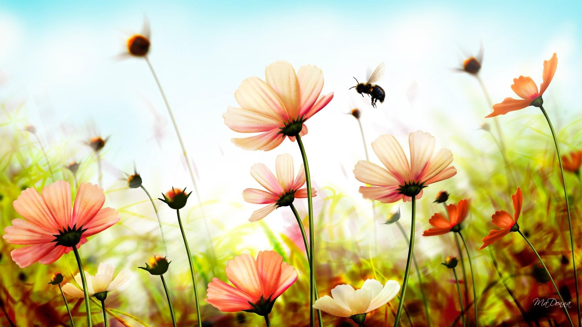 free summer flowers wallpaper high quality « long wallpapers