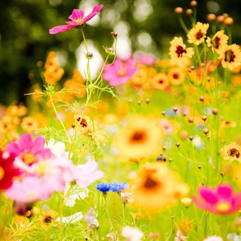 10 Best Summer Flowers Desktop Background FULL HD 1080p For PC Desktop 2021 free download free summer flowers wallpaper high resolution long wallpapers 800x800