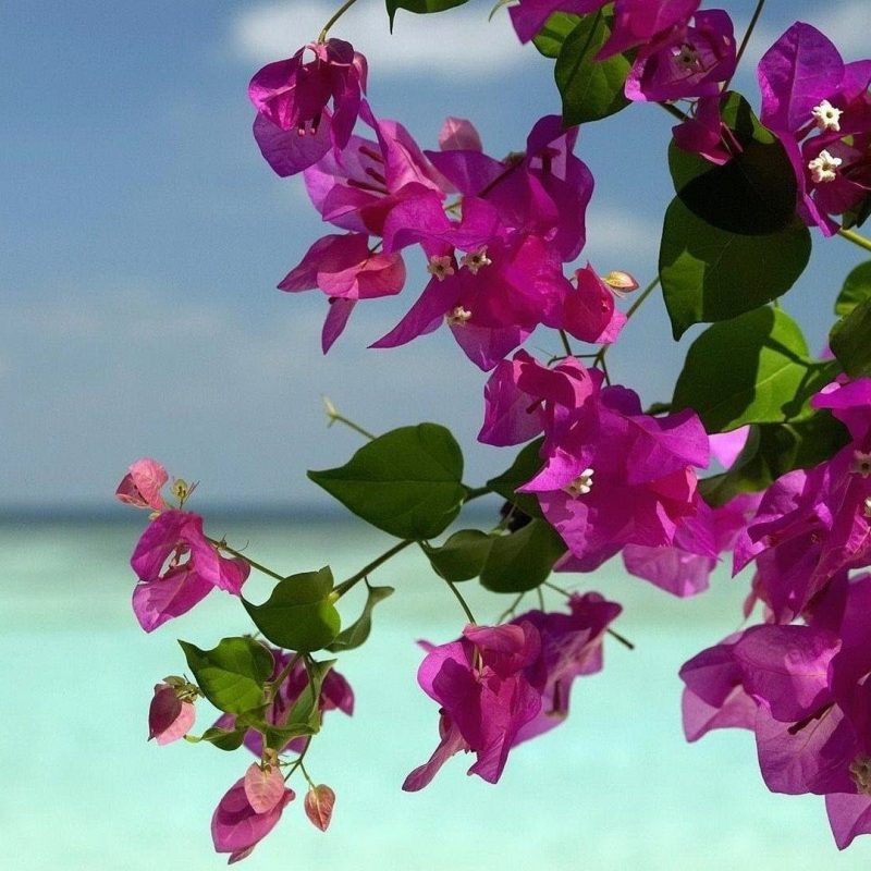 10 Best Summer Flowers Desktop Background FULL HD 1080p For PC Desktop 2021 free download free summer flowers wallpapers wide long wallpapers 800x800