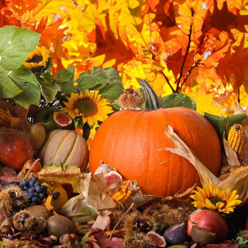 10 Top Free Thanksgiving Screensavers Wallpaper FULL HD 1080p For PC Desktop 2018 free download free thanksgiving screensavers wallpapers wallpaper cave 800x800