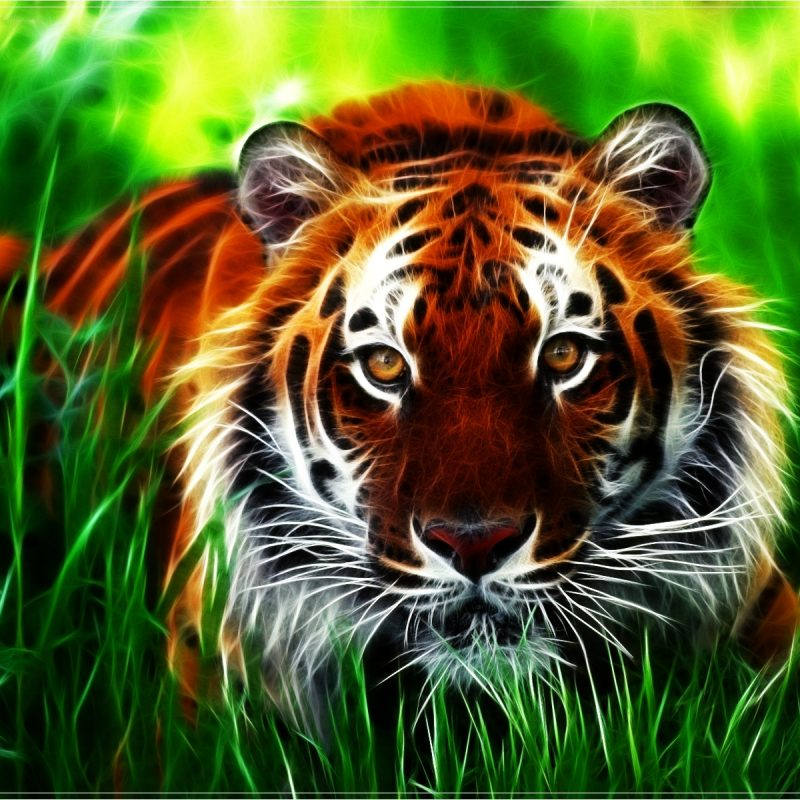 10 New Tiger Wallpaper Hd For Desktop FULL HD 1920×1080 For PC Desktop 2018 free download free tiger pictures long wallpapers 800x800