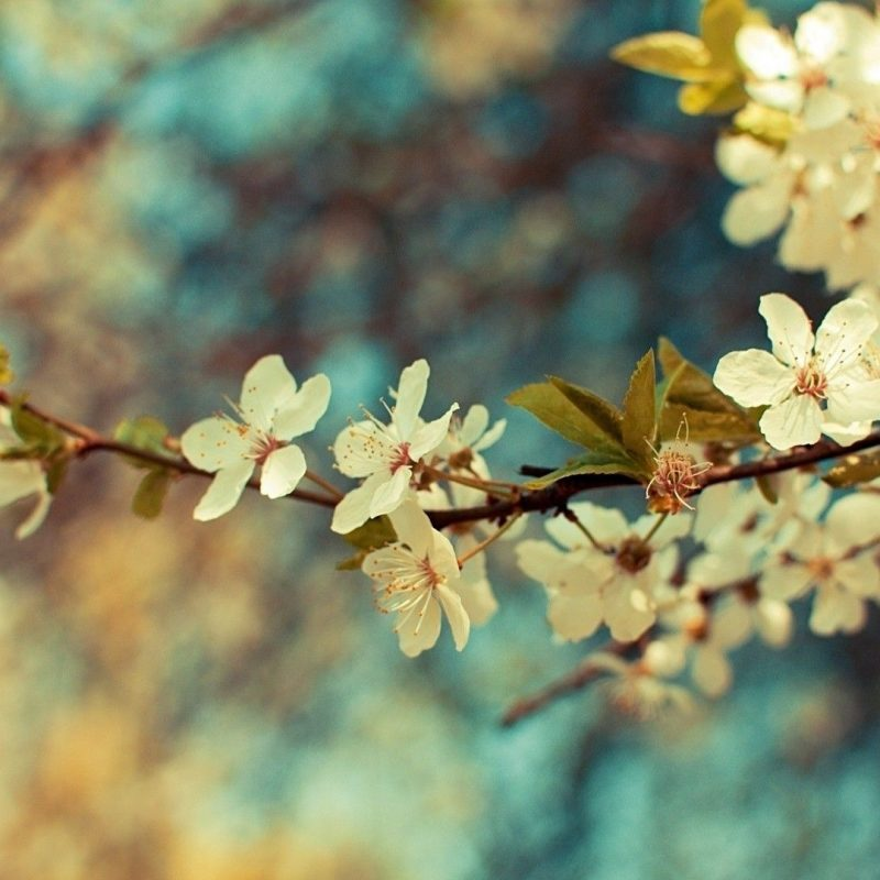 10 Best Desktop Wallpaper Flowers Vintage FULL HD 1080p For PC Desktop 2018 free download free vintage flower backgrounds long wallpapers 800x800
