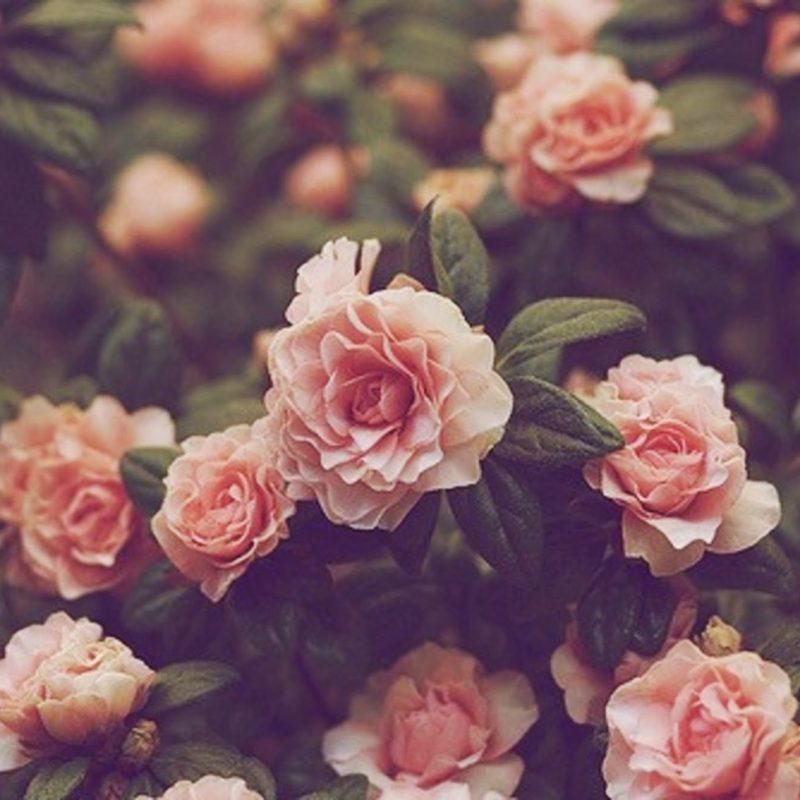 10 Best Desktop Wallpaper Flowers Vintage FULL HD 1080p For PC Desktop 2020 free download free vintage flower picture long wallpapers 800x800