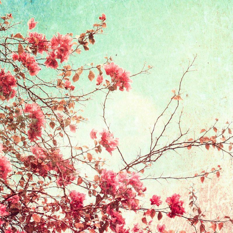 10 Best Desktop Wallpaper Flowers Vintage FULL HD 1080p For PC Desktop 2018 free download free vintage flower wallpapers high resolution long wallpapers 800x800