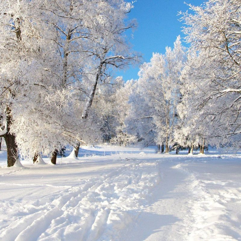 10 New Free Winter Wallpaper Download FULL HD 1080p For PC Desktop 2020 free download free winter backgrounds wallpapers wallpaper cave 1 800x800