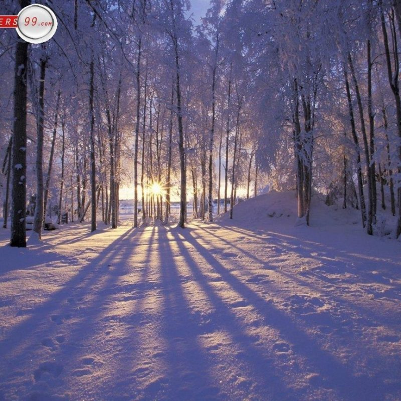 10 Latest Winter Scenes Wallpapers Free FULL HD 1920×1080 For PC Background 2018 free download free winter scene wallpapers wallpaper cave 5 800x800