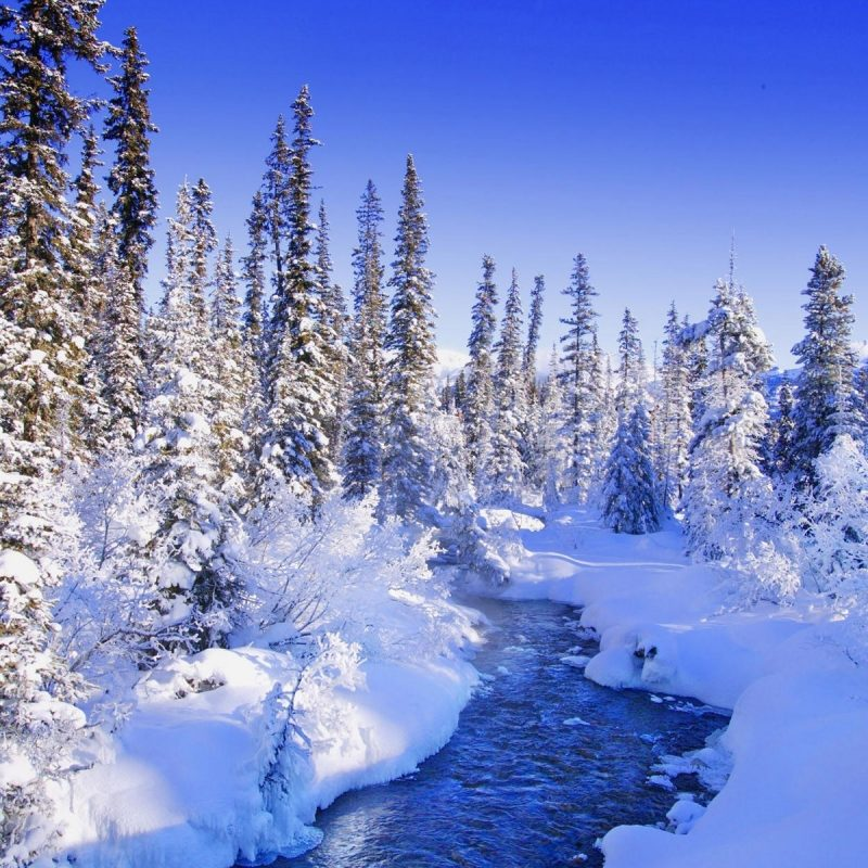 10 New Free Winter Wallpaper Download FULL HD 1080p For PC Desktop 2020 free download free winter wallpaper hd free download media file pixelstalk 800x800