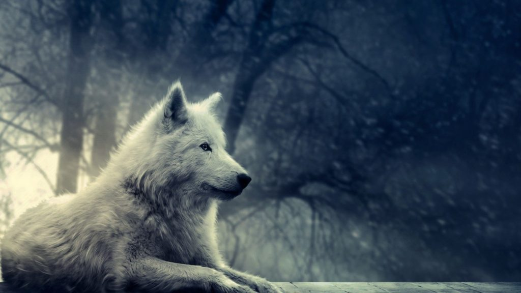 10 Top Cool Animal Wallpapers Wolf FULL HD 1920×1080 For PC Desktop 2018 free download free wolf wallpapers phone long wallpapers 1024x576