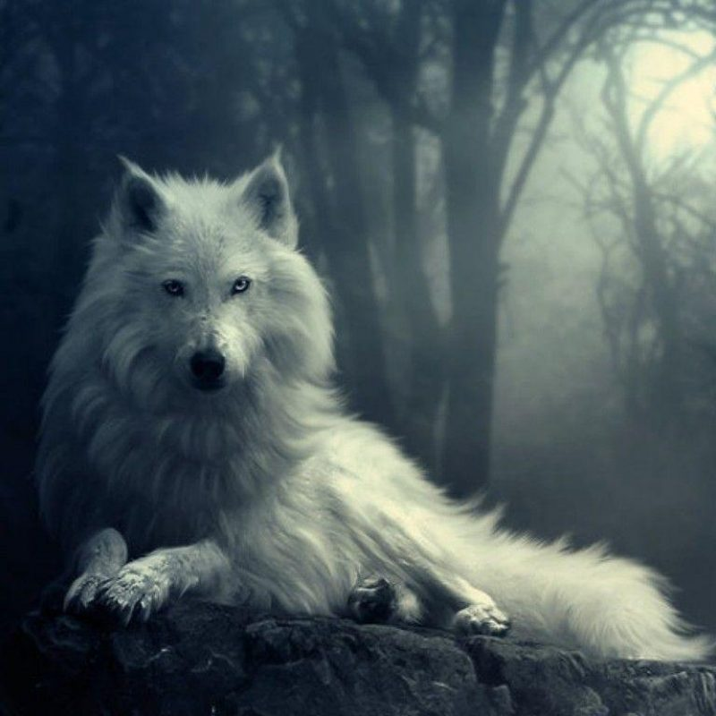 10 Top Free Wolf Wallpaper For Android FULL HD 1920×1080 For PC Background 2020 free download free wolf wallpapers wallpaper cave 800x800