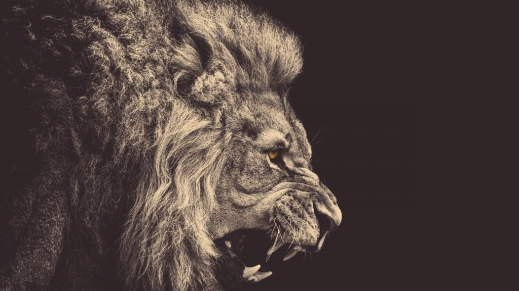 10 Most Popular Hd Lion Wallpapers 1080P FULL HD 1920×1080 For PC Desktop 2018 free download full hd 1080p animals wallpapers desktop backgrounds hd downloads 1024x576