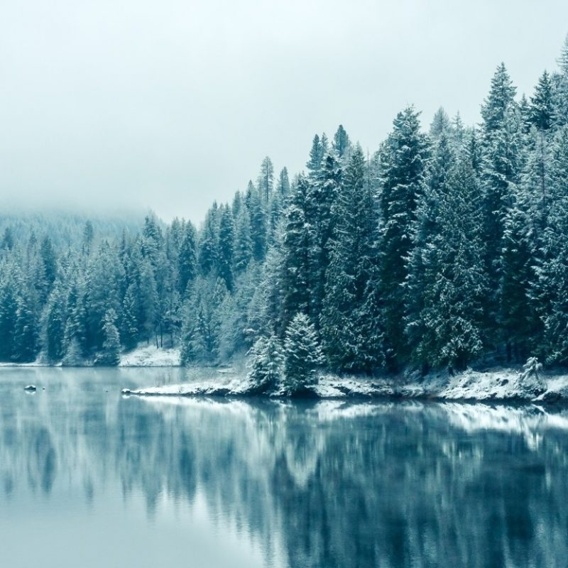 10 Best Winter Forest Wallpaper Hd FULL HD 1080p For PC Background 2018 free download full hd 1080p best hd winter wallpapers b scb wallpapers 800x800