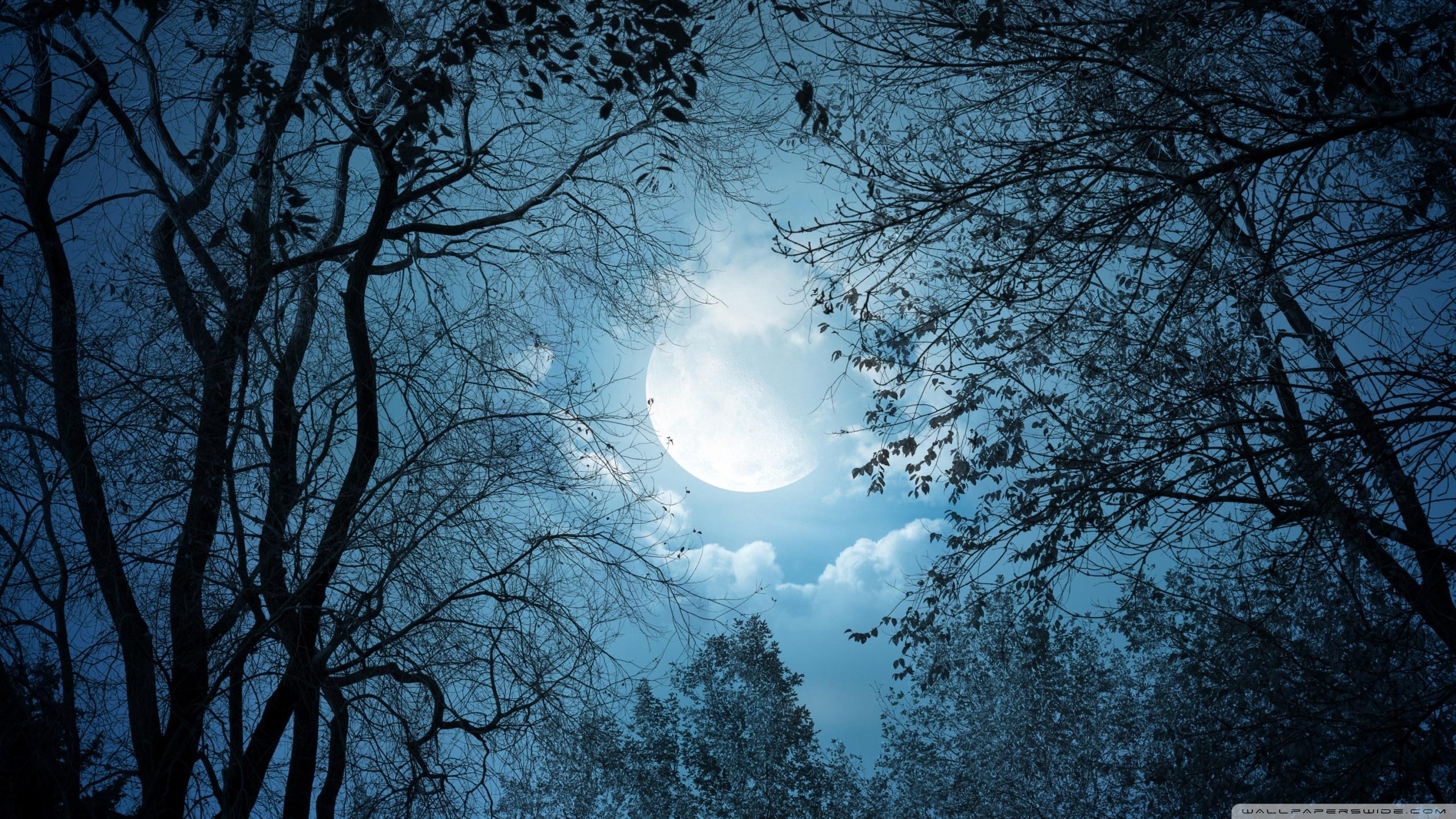 full moon night ❤ 4k hd desktop wallpaper for • dual monitor