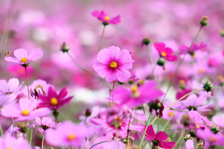 10 Best Flowers Wallpaper Desktop Background Full Screen FULL HD 1920×1080 For PC Desktop
