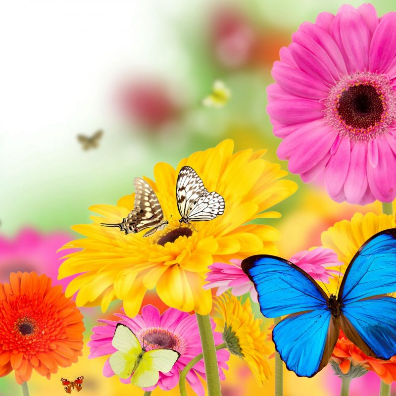 10 Most Popular Flowers And Butterflies Wallpaper FULL HD