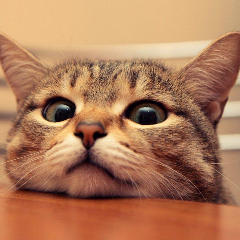 10 Top Funny Cat Desktop Wallpaper FULL HD 1080p For PC Desktop 2020 free download funny cat desktop wallpaper this wallpaper 800x800