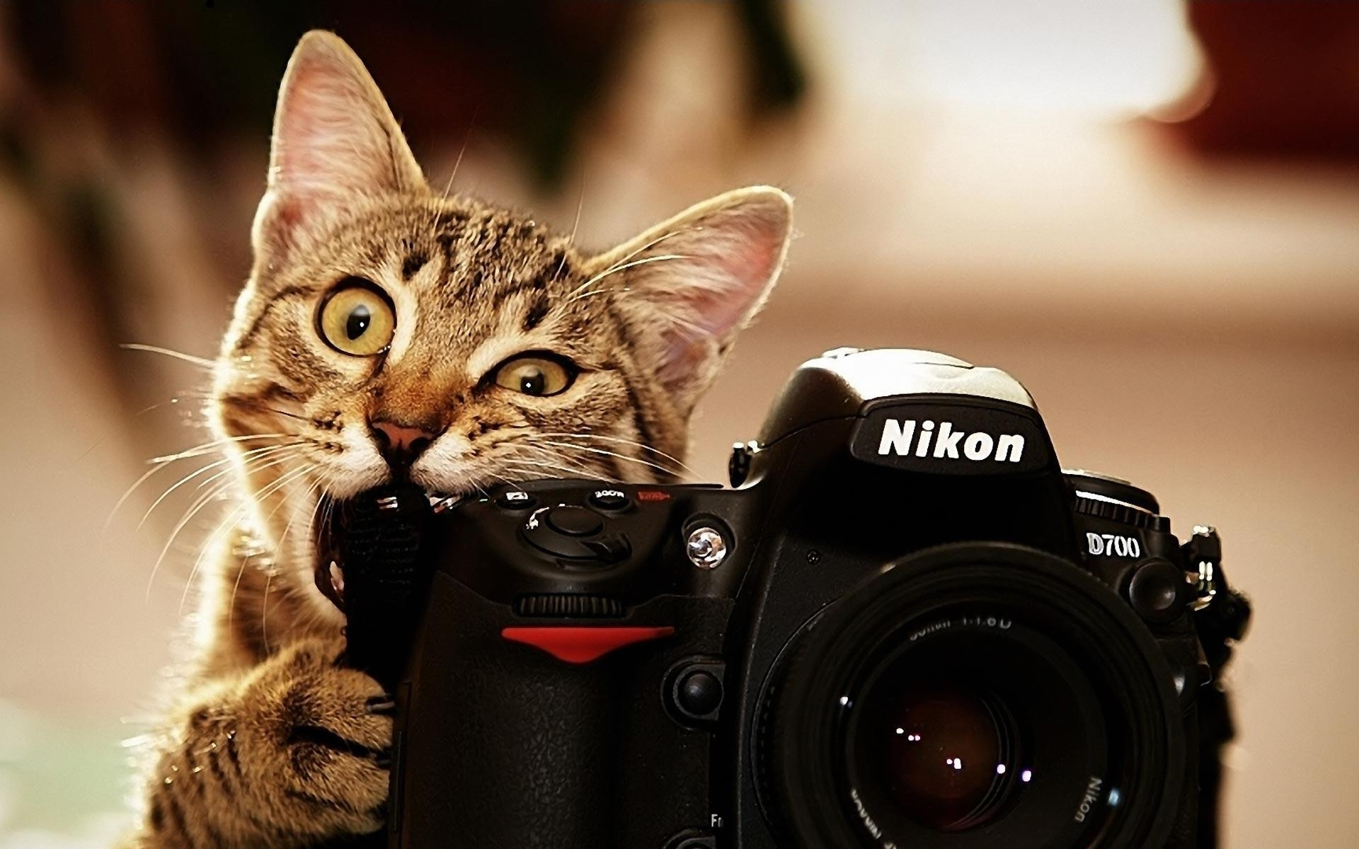 10 Top Funny Cat Desktop Wallpaper FULL HD 1080p For PC Desktop