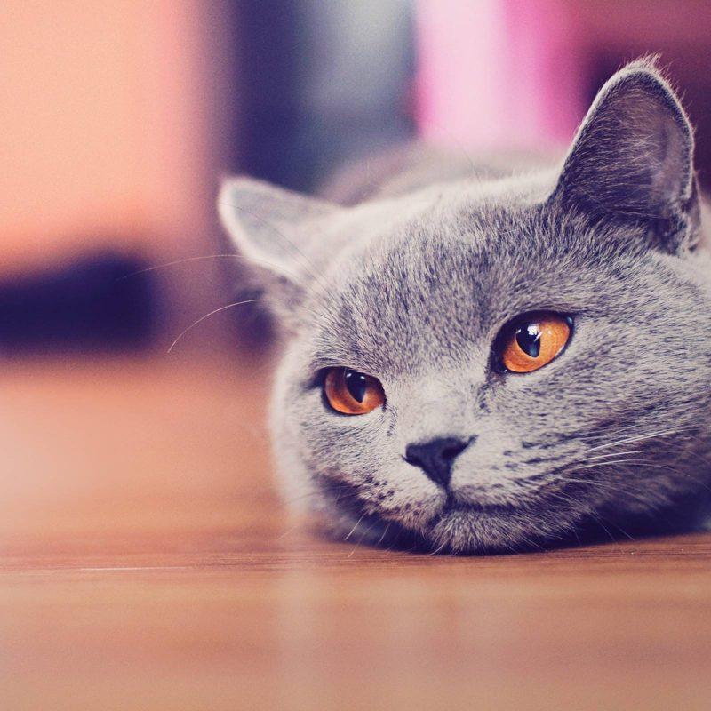 10 Most Popular Cute Cat Desktop Wallpaper FULL HD 1920×1080 For PC Desktop 2020 free download funny cat desktop wallpapers wallpaper cave 3 800x800