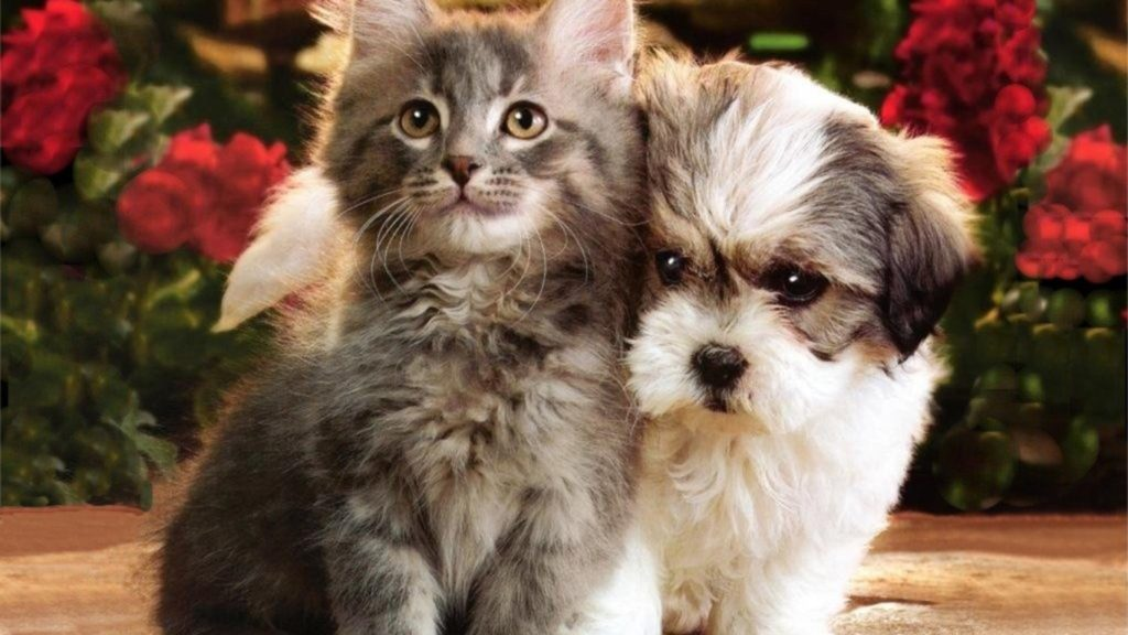 10 New Dog And Cat Backgrounds FULL HD 1920×1080 For PC Background 2020 free download funny cat images free download page 8 1024x576