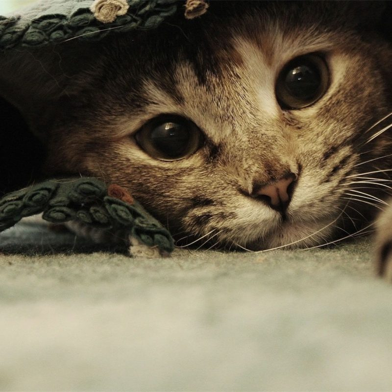 10 Top Funny Cat Desktop Wallpaper FULL HD 1080p For PC Desktop 2020 free download funny cat images in hd for desktop and mobile 800x800