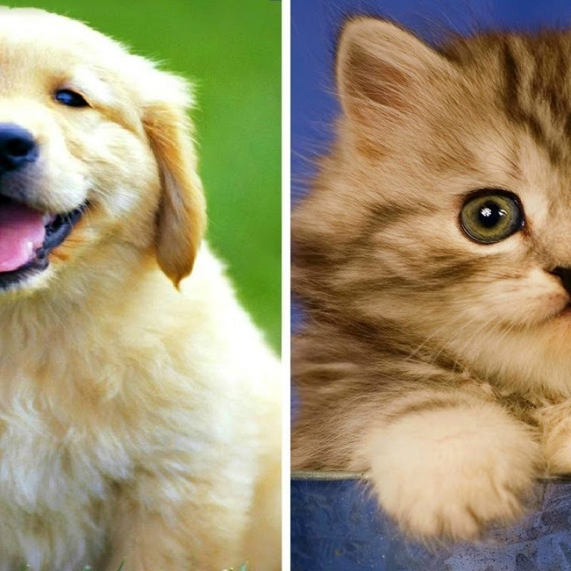 10 Top Cute Kittens And Puppies FULL HD 1080p For PC Background 2018 free download funny puppies vs funny kittens youtube 800x800