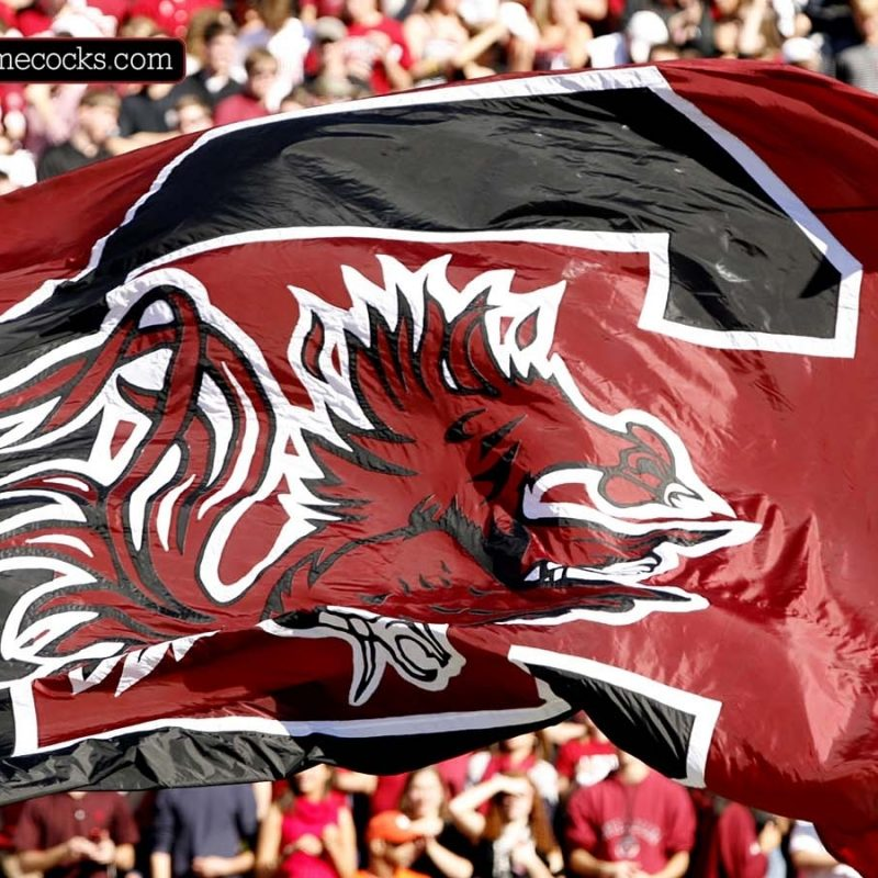 10 Best University Of South Carolina Wallpaper FULL HD 1080p For PC Desktop 2018 free download gamecocks wallpapers group 52 1 800x800