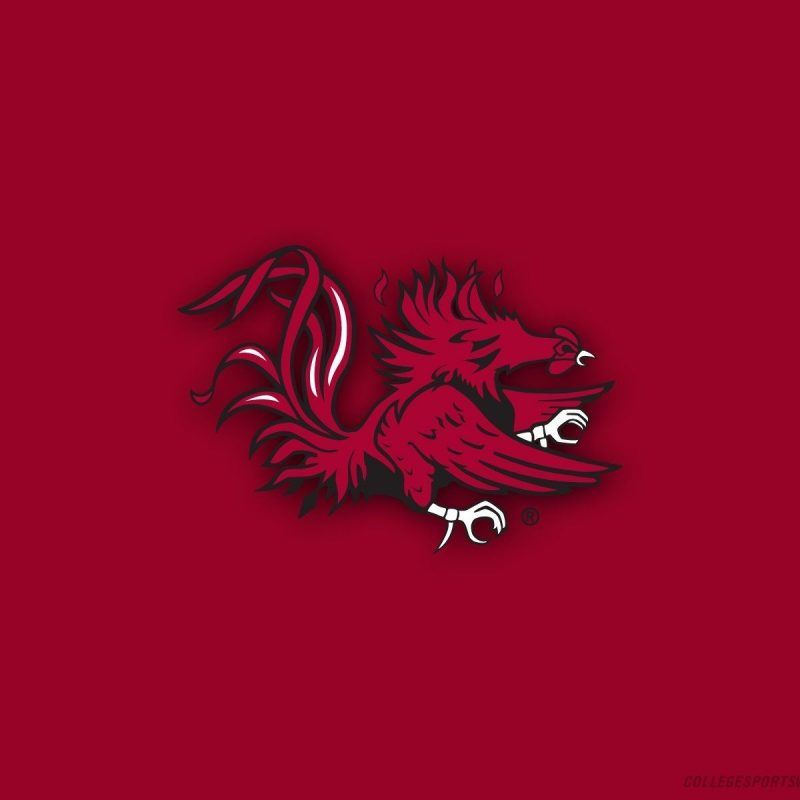10 Best University Of South Carolina Wallpaper FULL HD 1080p For PC Desktop 2018 free download gamecocks wallpapers group 52 800x800