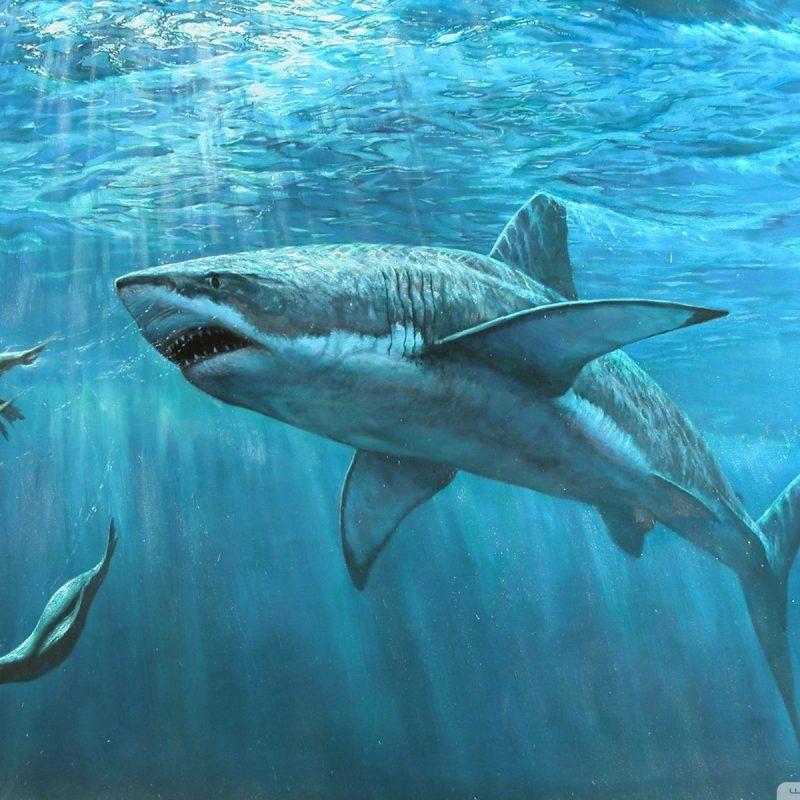 10 Top Great White Shark Wallpaper FULL HD 1080p For PC Desktop 2018 free download great white shark painting e29da4 4k hd desktop wallpaper for 4k ultra 800x800