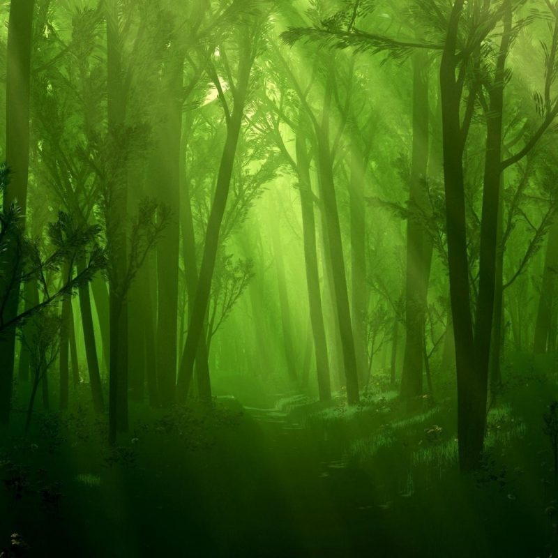 10 Most Popular Dark Green Forest Wallpaper FULL HD 1080p For PC Background 2018 free download green dark forest hd wallpaper colorful wallpaper better 800x800
