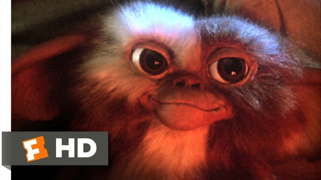 10 New Pictures Of Gizmo From Gremlins FULL HD 1080p For PC Background 2018 free download gremlins 1 6 movie clip billy meets gizmo 1984 hd youtube 1024x576
